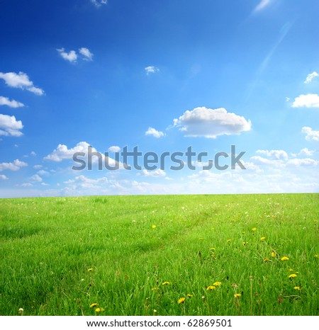 Green field with flowers under cloudy sky
