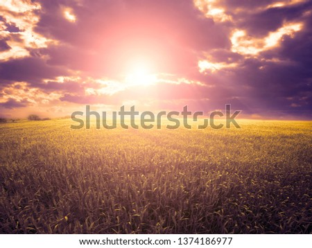 Green field with gorgeous sunset sky #1374186977