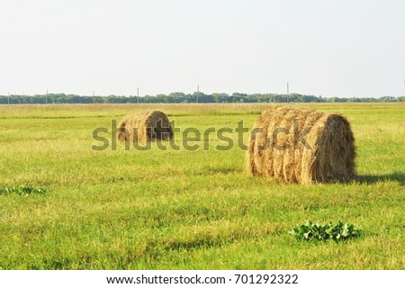 Green field with haystacks. Picturesque rural landscape. Sunny summer day, good weather. Stock nature photography