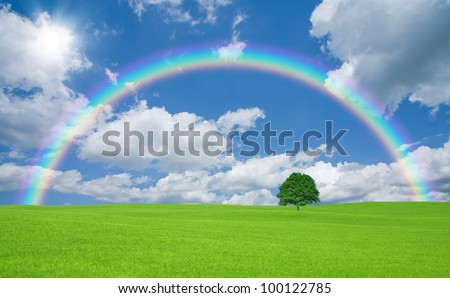 Green field with lone tree and rainbow