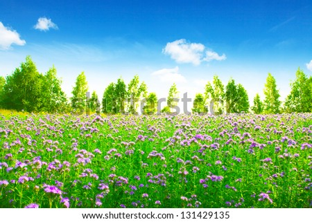 Green field with pink wildflowers and blue sky with white clouds.