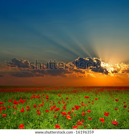 Green field with red poppies under cloud