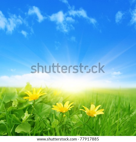 Green field with spring flowers and sun in blue sky.