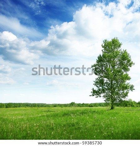Green field with tree and cloudy sky.