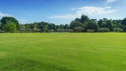 green field with tree in blue sky