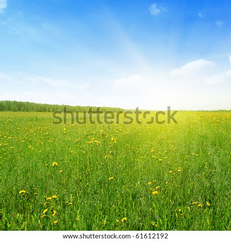 Green field  with yellow flowers,blue sky and sunlight.