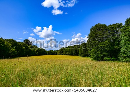 Green field with yellow flowers under blue cloudy sky. Summers day background. #1485084827