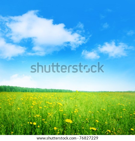 Green field with yellow wildflowers and blue sky.