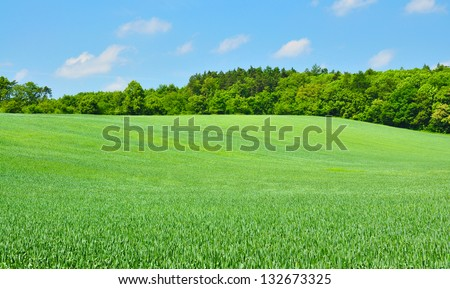 green fields and cloudy sky