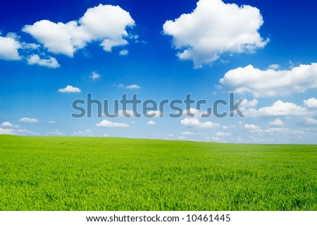 green fields and the beautiful blue sky