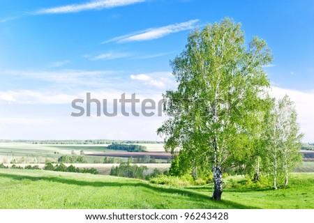 Green fields in spring