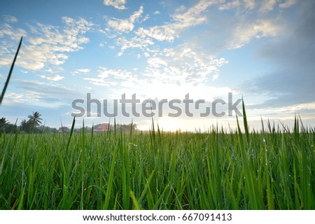Green fields, refreshing with the blue sky, Chiang rai, Thailand #667091413