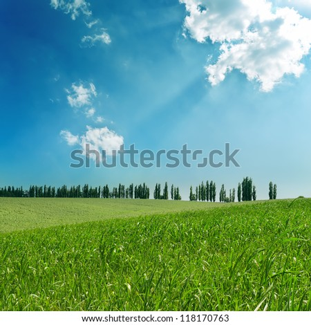 green fields under cloudy sky