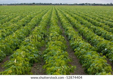 green fields with planted agriculture