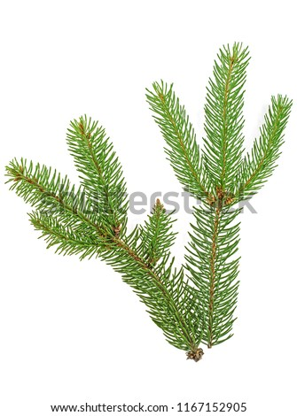 Green fir branches isolated on white background #1167152905