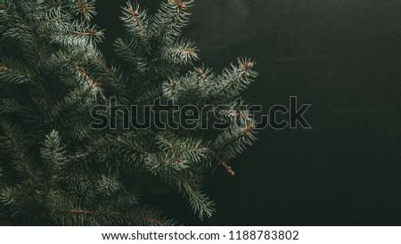 green fir branches on dark background