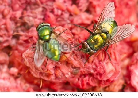 Green flays grabbing a leg on a crashed raspberries