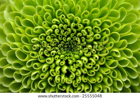 Green flower close-up, abstract background