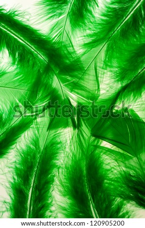 Green fluffy feathers as a background
