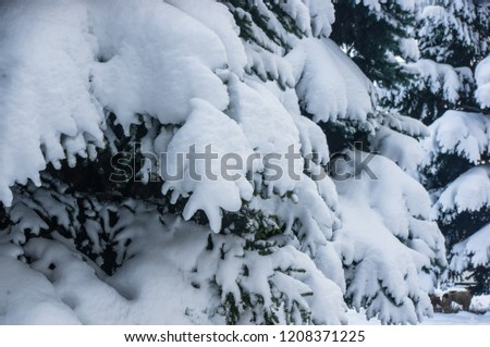 Green fluffy fir tree branch in the snow #1208371225