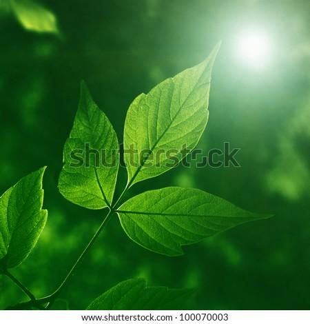 Green foliage at night.