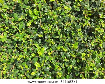 Green foliage background.