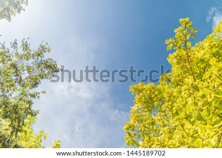 Green foliage background cloudy sky #1445189702