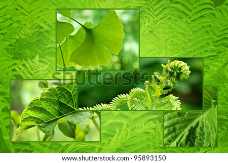 Green foliage collage background created from several closeup images of green plant life.  Copy space included in composition.