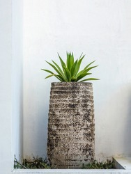 Green foliage plant growing in patterned urn in garden niche by whitewashed wall of concrete building in New Urbanist style, Alys Beach, Florida, USA
