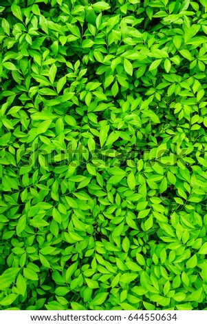 green foliage texture, leaf nature background #644550634