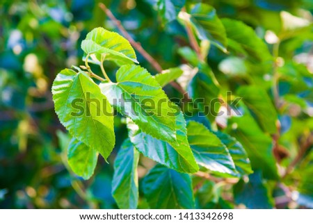 Green foliage with shallow depth of field in a public park in the spring. Shallow depth of field background. #1413342698