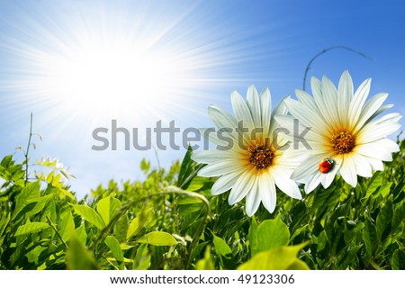 Green foliage with two daisies and ladybug over sunny blue sky