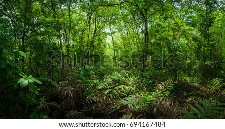 green forest #694167484