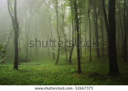 green forest after rain