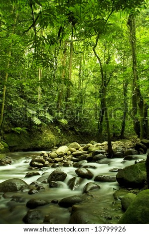 green forest and river