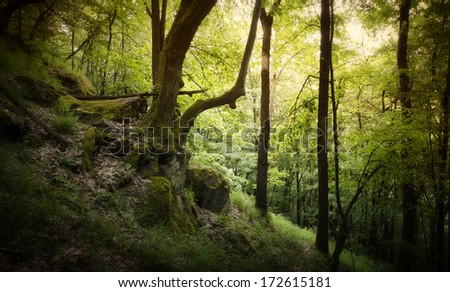 green forest at sunset with tree on cliffs #172615181