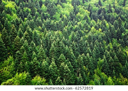 Green forest background #62572819
