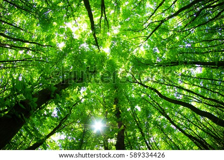green forest background in a sunny day #589334426