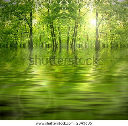 Green forest by a river