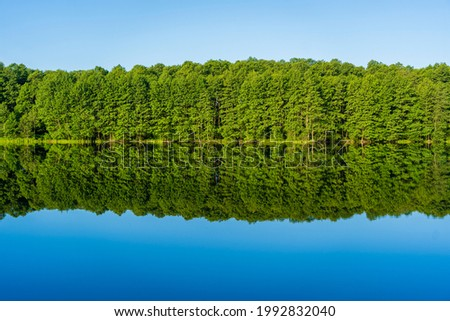 Green forest by the lake in reflection in the calm water, Ukraine. Beauty in nature