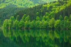 Green forest by the lake in reflection in the water beauty in nature