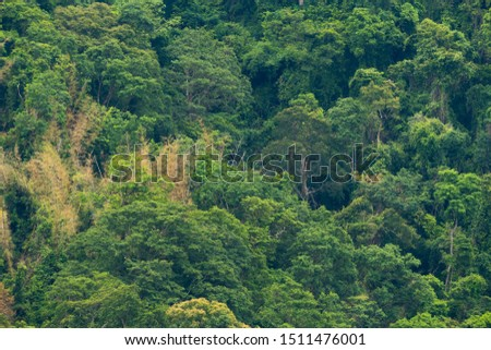 Green forest foliage aerial view woodland tree canopy nature, Nature background