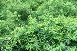 Green forest gree nature landscape background.