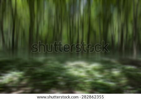 green forest in spring time,natural abstract  forest background