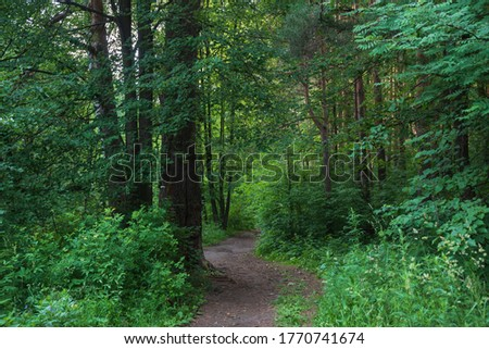 green forest in summer, landscape with a path.
