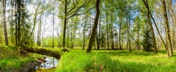 GREEN FOREST LANDSCAPE WITH WATER STREAM, TREES AND FRESH GRASS IN SUN LIGHT, BEAUTY OF SPRING NATURE
