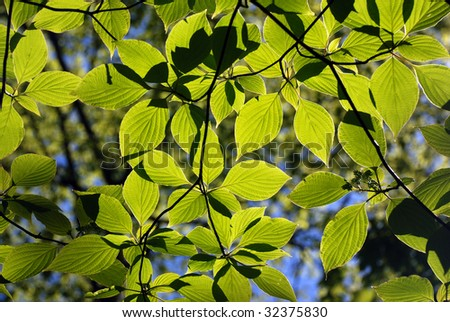Green forest leaves background