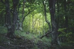green forest light