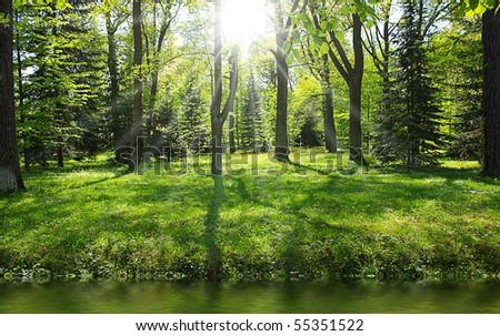 Green forest near river in sunny day