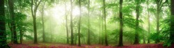 Green forest panorama with soft rays of light falling through fog and flattering the fresh foliage